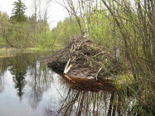 В Волгограде ждут экокатастрофы при строительстве моста через Волгу