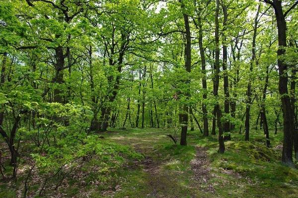 Таганрогская роща «Дубки» стала особо охраняемой природной территорией