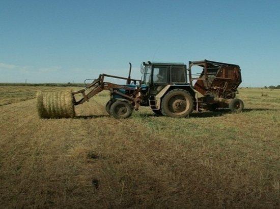 Животноводы Калмыкии бьют тревогу из-за критической ситуации с кормами
