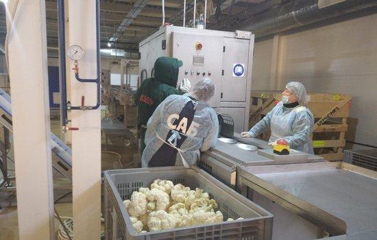 В Волгограде реализовали инвестпроект по переработке и заморозке овощей на 545 млн руб.