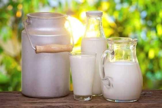 Предприятия Кубани в 2020 г. произвели рекордные 1,5 млн тонн молока