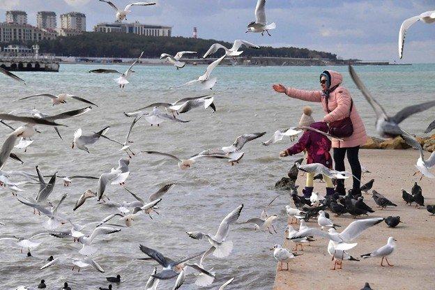 В Ростове-на-Дону наблюдается нашествие чаек