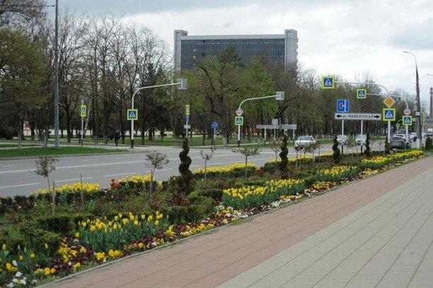 100 тыс. цветов расцвели на клумбах  Майкопа