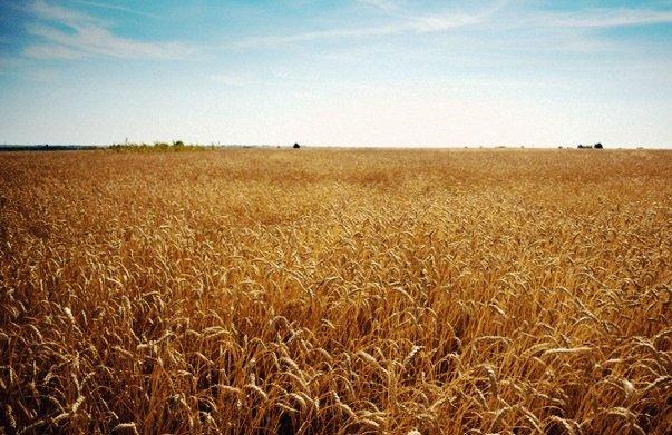 Объем экспорта аграрной продукции Волгоградской области вырос в 2 раза