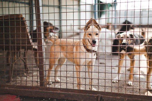 Приют для собак появится в Калмыкии
